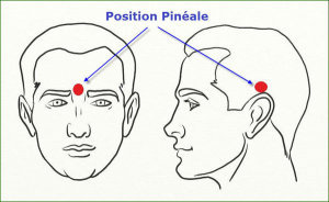 position-glande-pineale