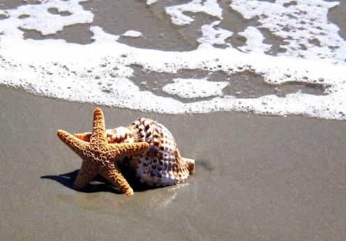 étoile de mer, méditation de 5 minutes