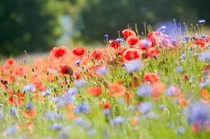 retour, fleurs, miel, abeille, pollen