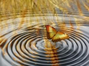papillon, évolution