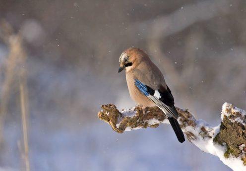 oiseau, histoire de sagesse