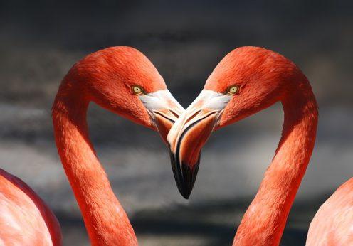 attirez l'amour