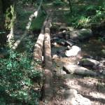 Dieu est dans le bois