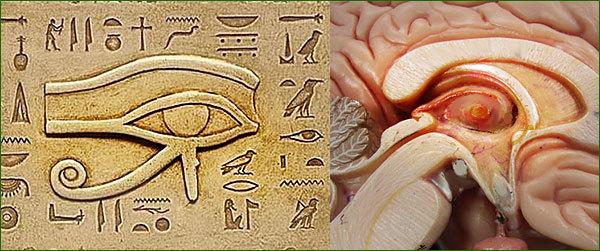 glande pinéale, oeil d'horus