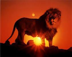 énergie du jour, lion