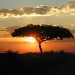 Planter des arbres pour la prospérité