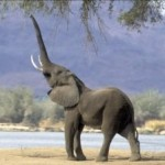 Quatre aveugles et un éléphant