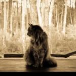 Les animaux de compagnies sont-ils nos miroirs ?