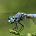 Histoire d'une libellule