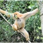 L'histoire du singe…