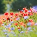 Le retour des fleurs