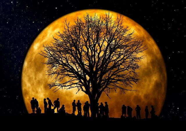 enracinement, arbre