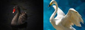 les oiseaux blancs et les oiseaux noirs
