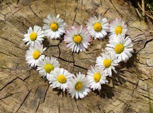 attirez l'amour, méditation