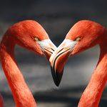 Attirer l'amour et vibrer l'amour