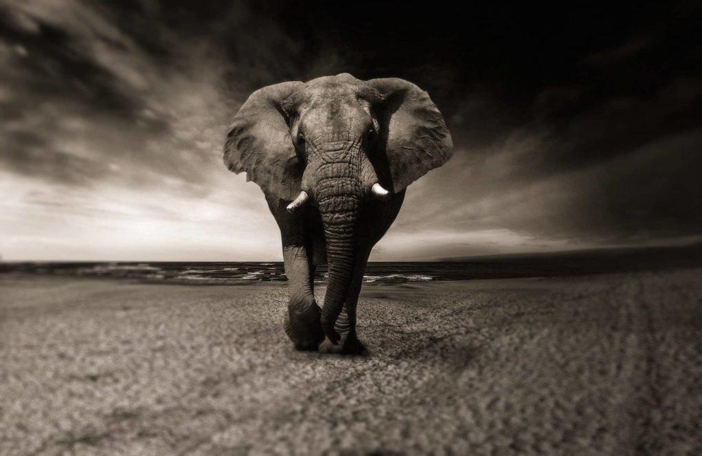 éléphant, pleine lune, éléphant et porcelaine