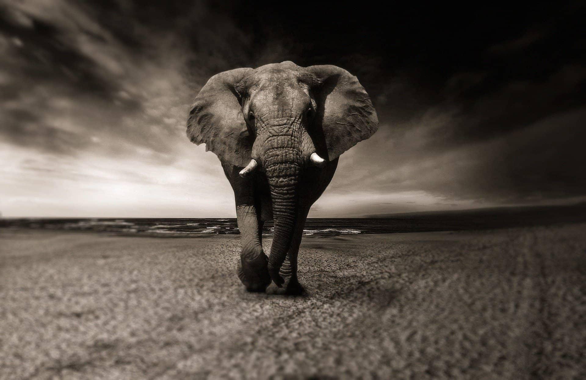 éléphant, pleine lune, éléphan et porcelaine, puissance, énergie