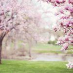 Le printemps intérieur…