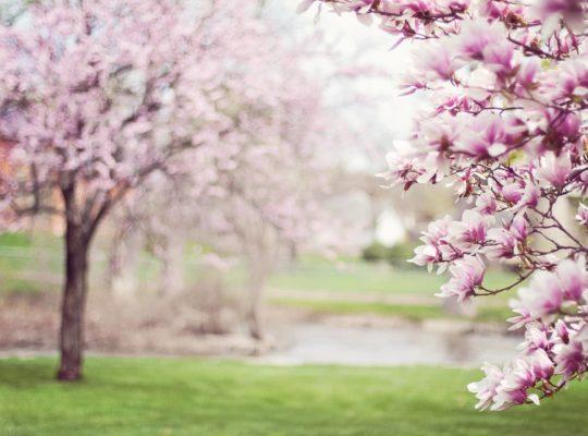 printemps intérieur, printemps, calme